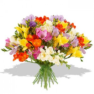 11 Fragrant Freesias