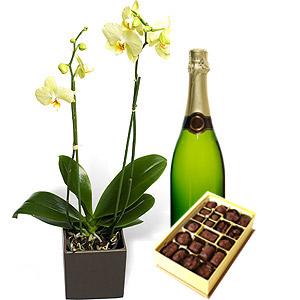 Орхидея, Шоколади, Шампанско